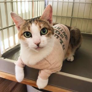 Tシャツも似合うあめちゃん