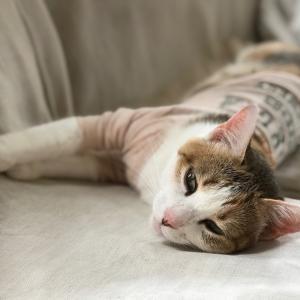 テレワーク対応猫