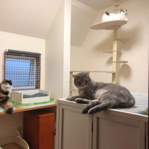 猫部屋の窓