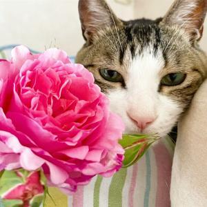 脱走対策は猫への愛