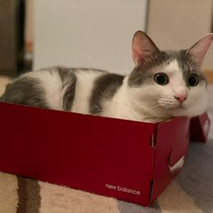 箱入り猫たち