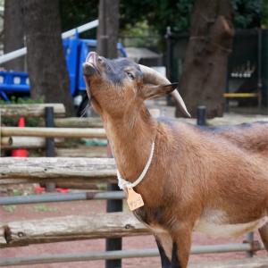 秋の動物祭りの中止がとても悲しい