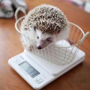 ころも、久しぶりの体重測定。