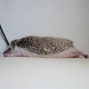 a superhedgehog in his dream