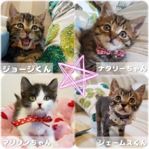 明日は猫の未来とびら譲渡会です。(拡散希望)