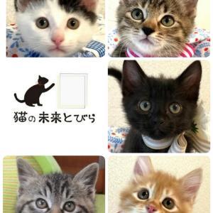 明日(5/30)は猫の未来とびら譲渡会です。(拡散希望)