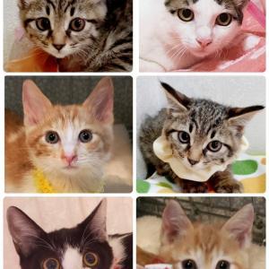 明日(9/26)は猫の未来とびら譲渡会を開催致します(拡散希望)