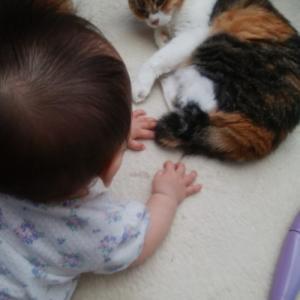 ペット保険は高齢ネコでも入れるの? 比較サイトのランキング3位まで分析