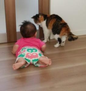 14歳のネコと生後11ヶ月の娘 最初は怖がっていたけど今は仲良し