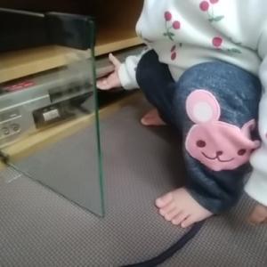 娘1歳4ヶ月!一人遊びしたり泣いて注意を引いたりするけど外では歩かない