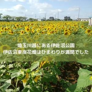 埼玉川越にある伊佐沼公園。伊佐沼東岸花畑はひまわりが満開でした