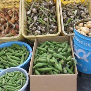 「初夏の大収穫祭」