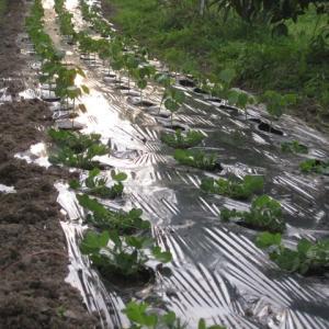 「小豆も落花生も植えたぞ」