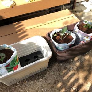 今年も家庭菜園開始!