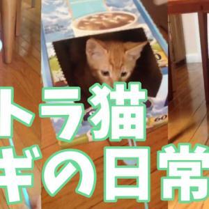 Youtube動画投稿!【ねこ動画】茶トラ猫 ムギの日常 #4