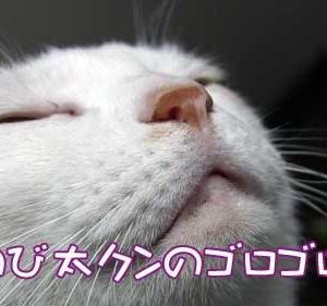 のび太クンのゴロゴロ 2020.11.20