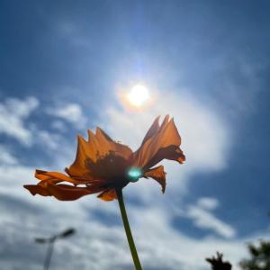 乙女座新月 世界のための美意識を育てて。