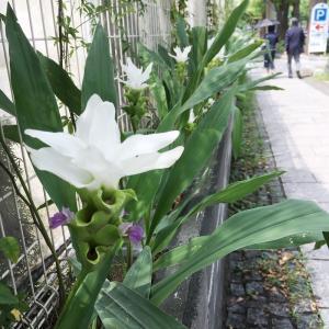 横浜で見た不思議な花