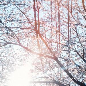 【備忘録】コロナで静かになった渋谷で、今年もライカM10で桜を撮りました