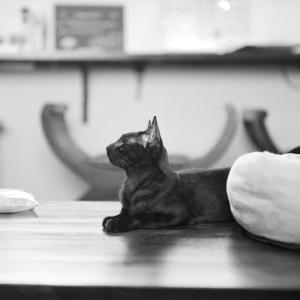 Rolleiflex片手に、保護猫喫茶・要にゃんこ亭へ行ってみた