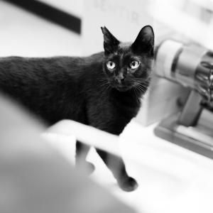 Leicaブログが猫ブログに!? 黒猫のクロをお迎えしました