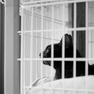 二眼レフと猫。Rolleiflex 2.8Fで撮る黒猫氏