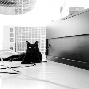 猫と口内炎と明かりが消えた家のLEICA M10 Monochrom