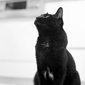 ローライフレックスで追いかける、元気になった黒猫氏