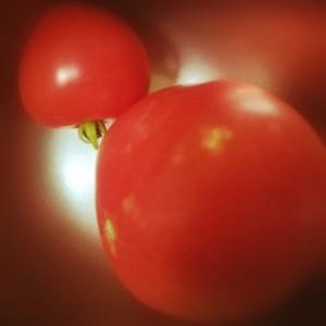 トマトちゃん収穫・デカイ★