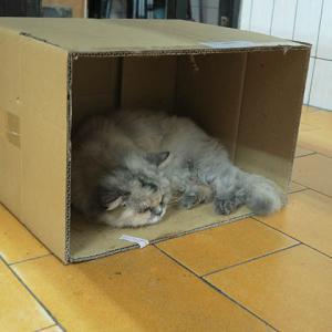 【速報】義天宮の猫