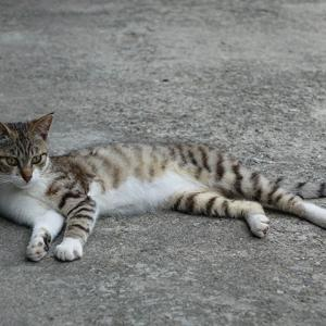 【速報】猴硐の子猫