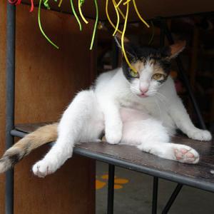 【速報】猴硐の猫(貓集咖啡)