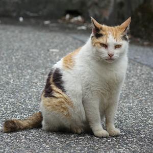 【速報】猴硐の猫