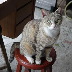 【速報】猴硐の母猫