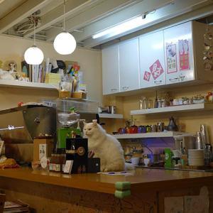 【速報】猴硐の猫(217Cafe)