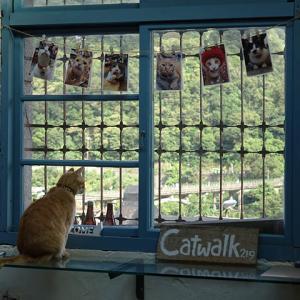 【速報】猴硐の猫(Catwalk219)