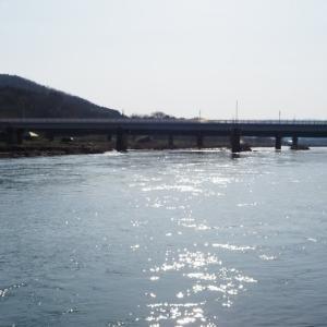 三面川3回目釣行 瀬波大橋下流