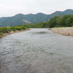 三面川5回目釣行 水明橋上流