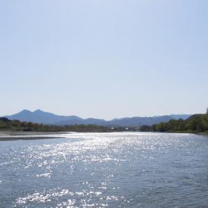 三面川7回目釣行 ウライ下流