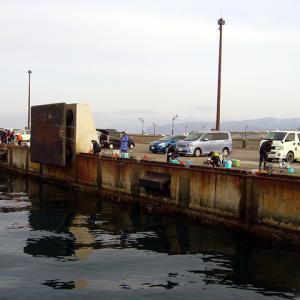 岩内港〜入舸漁港 ホッケの旅