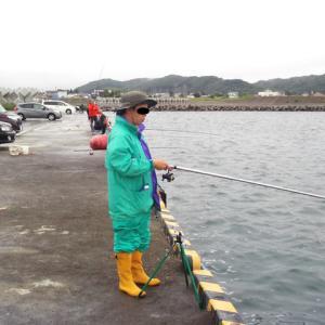 白老漁港のイワシ