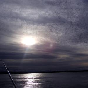 苫小牧東フクラゲ、ショゴ狙い