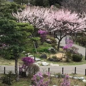 札幌散策 天神山緑地
