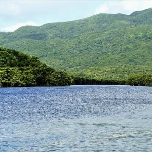 '19石垣島 西表島観光② 本物のジャングルがここに!仲間川マングローブクルーズの様子をレポート!
