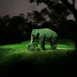 '19 シンガポール ナイトサファリを体験。夜行性動物の生態を観賞後は、アニマルショーで締めくくる。