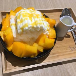 今年初のマンゴーかき氷