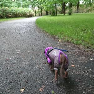 夕方散歩は 雨上がりのご近所公園で!!