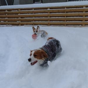 久々の新雪に大喜び