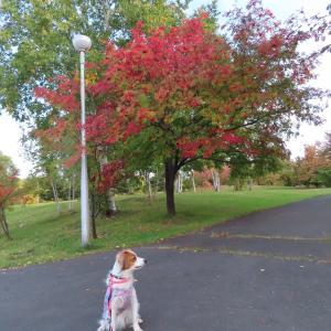 公園の紅葉の進み具合を見に