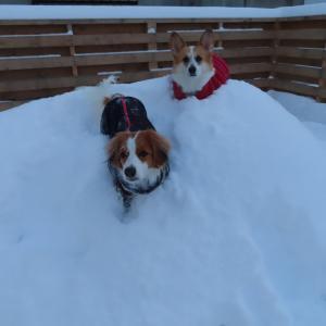 ここまで除雪間に合わない